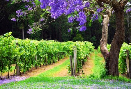 Bago Vineyards - Tourism Cairns