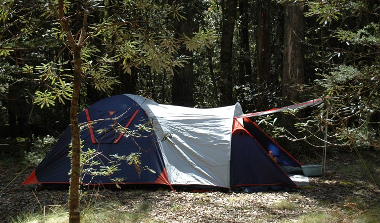 Thungutti campground - Tourism Cairns