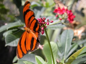 Butterfly Farm - Tourism Cairns