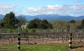 Buller View Wines - Tourism Cairns