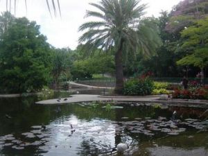 Brisbane City Botanic Gardens - Tourism Cairns