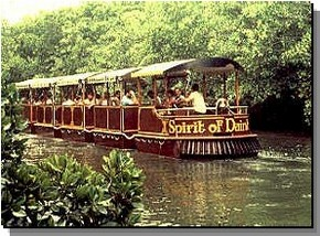 Daintree Rainforest River Trains - Tourism Cairns