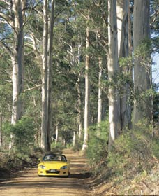 Mount Shadforth Scenic Drive - Tourism Cairns