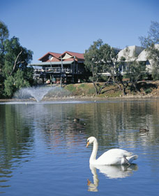 White Swans - Tourism Cairns