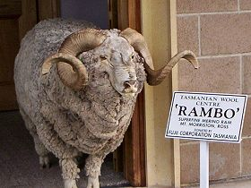 Tasmanian Wool Centre - Tourism Cairns