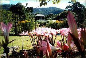 Blueberry Cottage Open Gardens - Tourism Cairns