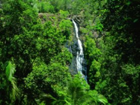 Kondalilla National Park - Tourism Cairns