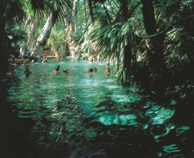 Mataranka Thermal Pool - Tourism Cairns