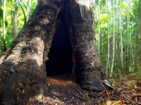 Tewantin National Park - Tourism Cairns