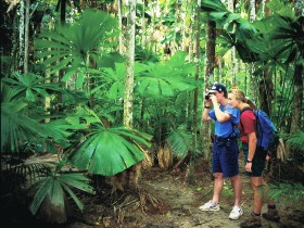 Mount Sorrow Ridge Trail, Daintree National Park