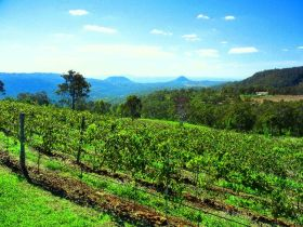 Preston Peak Wines - Tourism Cairns