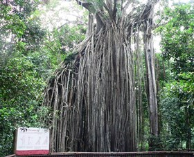 Curtain Fig National Park - Tourism Cairns