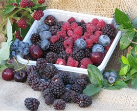 Bright Berry Farms - Tourism Cairns