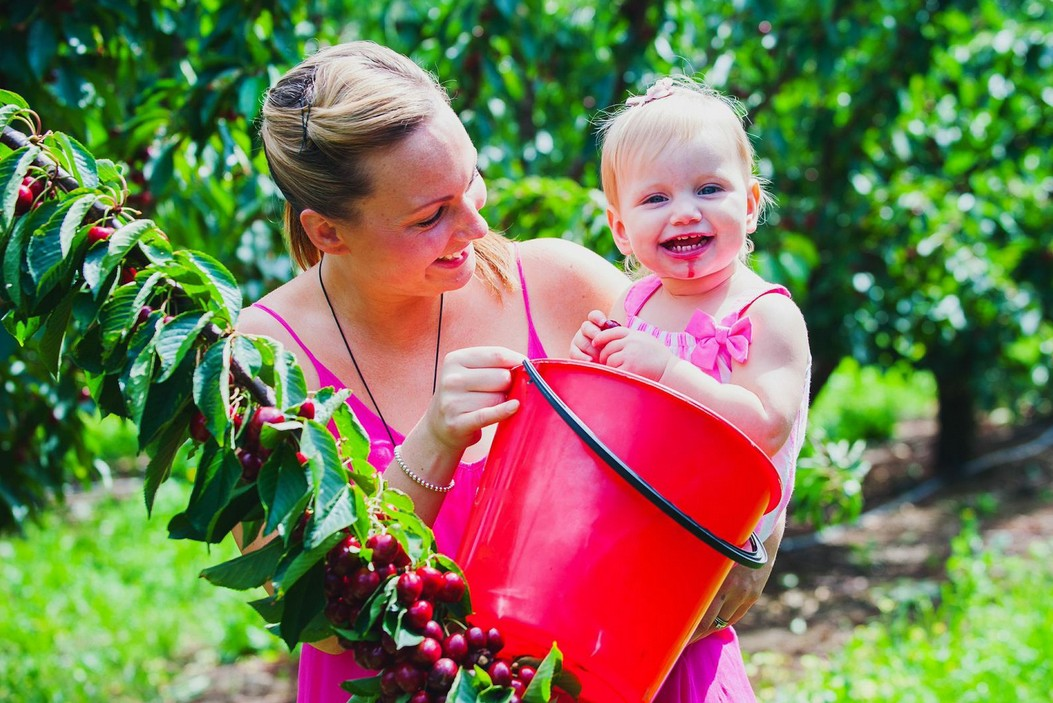 Cherryhill Orchards - Tourism Cairns