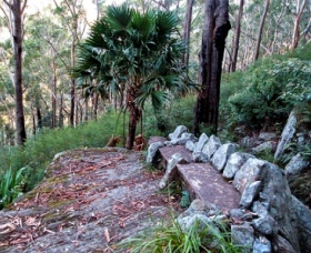 Wodi Wodi Walking Track - Tourism Cairns