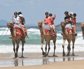 Camel Rides with Coffs Coast Camels - Tourism Cairns