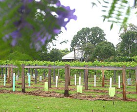 Douglas Vale Historic Homestead  Vineyard - Tourism Cairns