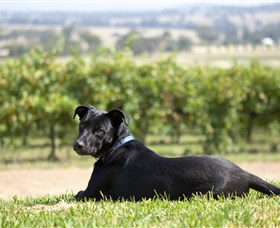 Moothi Estate Vineyard and Cellar Door - Tourism Cairns