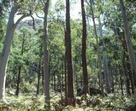 Cathedral Range State Park - Tourism Cairns