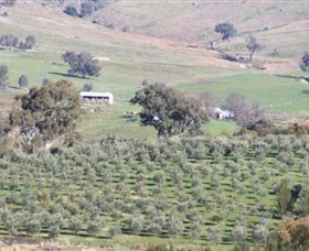 Wymah Organic Olives and Lambs - Tourism Cairns