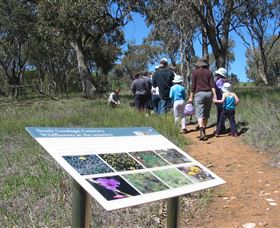 South Gundagai Woodlands Walk - Tourism Cairns