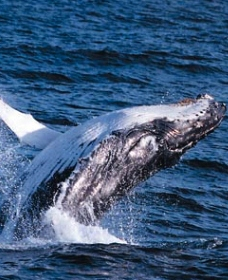 Sydney Eco Whale Watching - Tourism Cairns