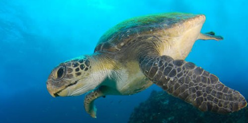 Byron Bay Dive Centre - Tourism Cairns