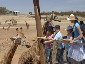 Monarto Open Range Zoo - Tourism Cairns