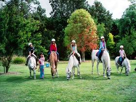 Limestone Coast Horseriding - Tourism Cairns