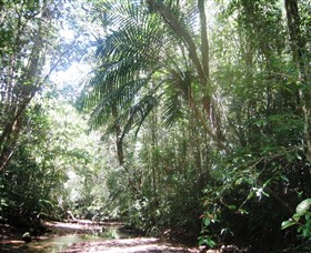 Mount Lewis National Park - Tourism Cairns