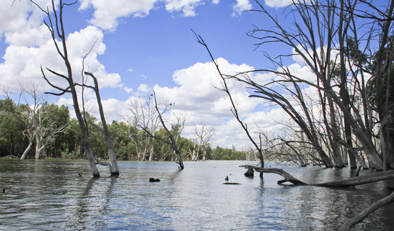 Murrumbidgee Valley National Park - Tourism Cairns