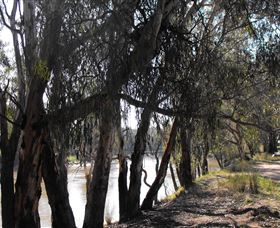 Mia Forest Drives Narrandera - Tourism Cairns