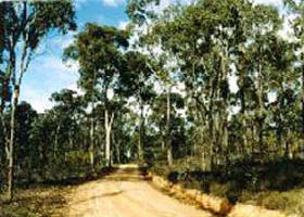 Paddys Ranges State Park - Tourism Cairns