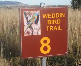 Weddin Bird Trails - Tourism Cairns