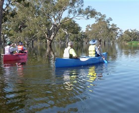 Doodle Cooma Swamp - Tourism Cairns