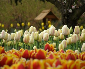 Tulip Top Gardens - Tourism Cairns