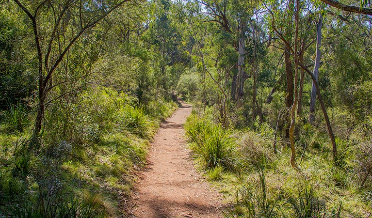 Mares Forest Creek walking track - Tourism Cairns