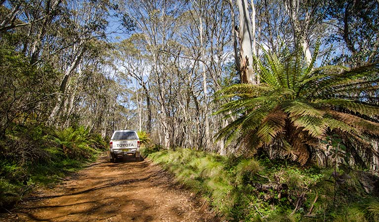 Barrington trail - Tourism Cairns