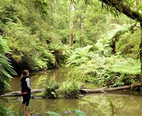 Morwell National Park - Tourism Cairns