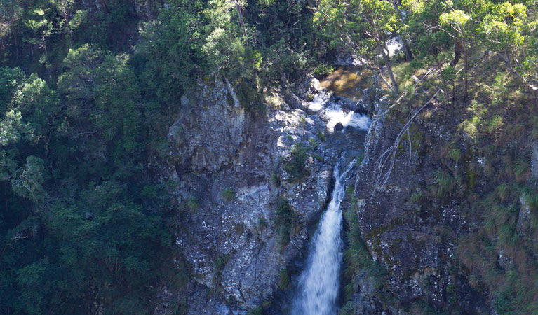 Lyrebird Falls walking track - Tourism Cairns
