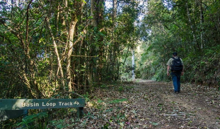 Basin Loop track - Tourism Cairns