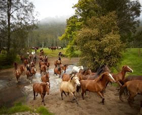 Glenworth Valley Horse Riding - Tourism Cairns