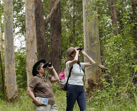 Chichester State Forest - Tourism Cairns