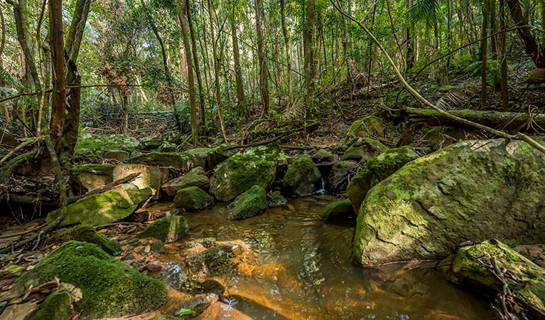 Palm Grove Nature Reserve - Tourism Cairns