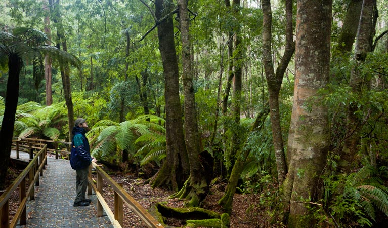 Monga National Park - Tourism Cairns