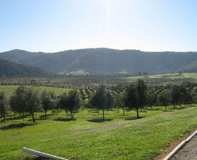Hastings Valley Olives - Tourism Cairns