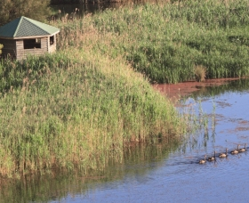 Spring Creek Bird Hide - Tourism Cairns
