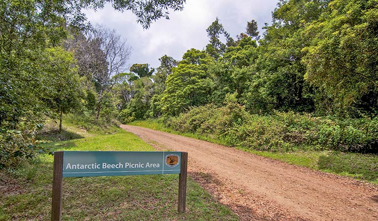 Antarctic Beech picnic area - Tourism Cairns