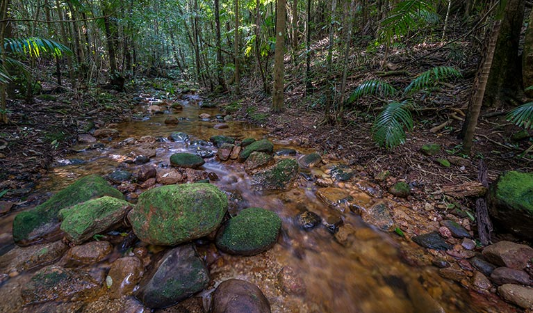 Starrs Creek picnic area - Tourism Cairns