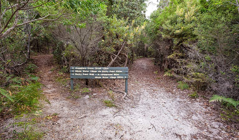 Angophora grove walking track - Tourism Cairns